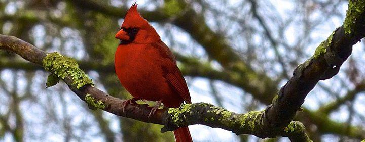 Bird Blog